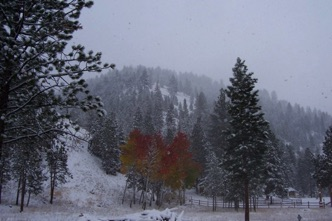Fall color with snow